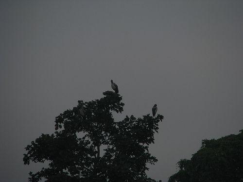 Cranes on trees