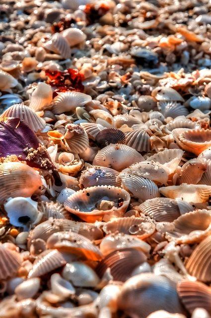 Sea Shells.. on Sanibel Island