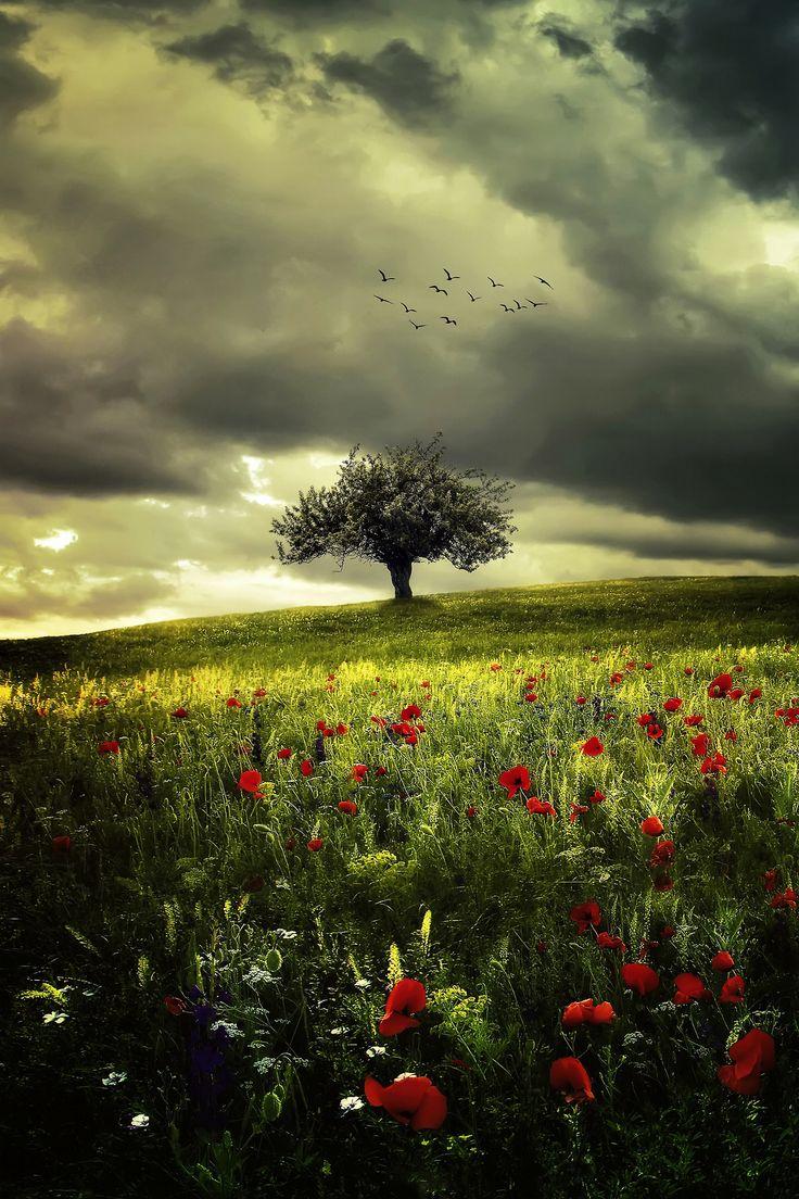 favorite-season:  Poppies by Bess™