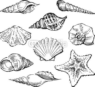 Vector: Seashells