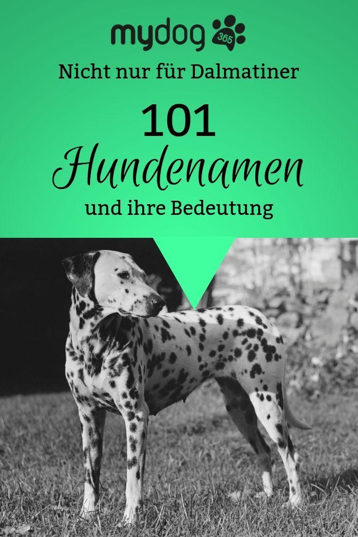 101 Dalmatiner Ah Ne 101 Hundenamen Ja Genau Denn Wer Fur Seinen Hund Den Namen Sucht Der Braucht Naturlich Hundenamen Dalmatiner 101 Dalmatiner Namen