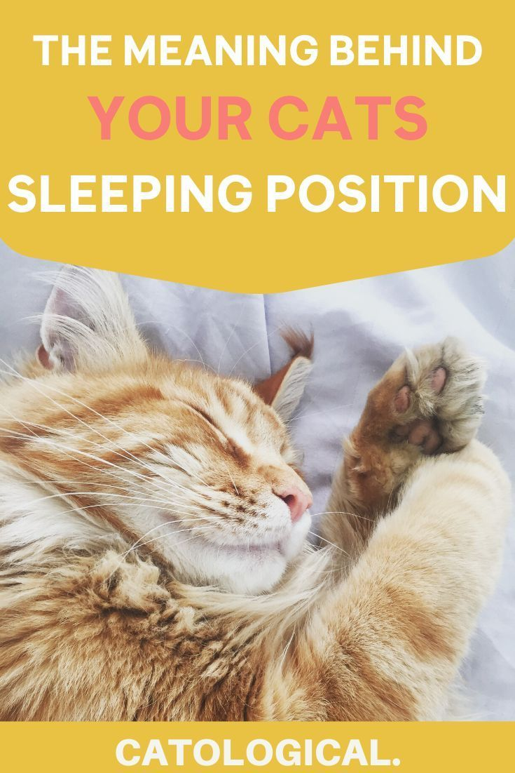 Cat Sleeping Position Meanings What Does Belly Up Or Curled Up Mean In 2020 Cat Sleeping Positions Cat Sleeping Cats