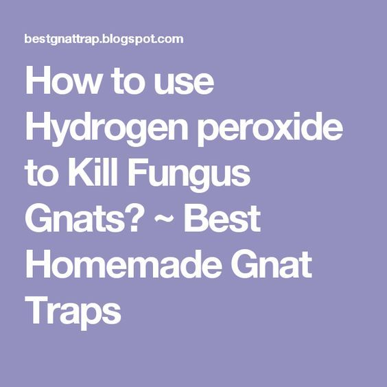 How to use Hydrogen peroxide to Kill Fungus Gnats? ~ Best Homemade Gnat Traps