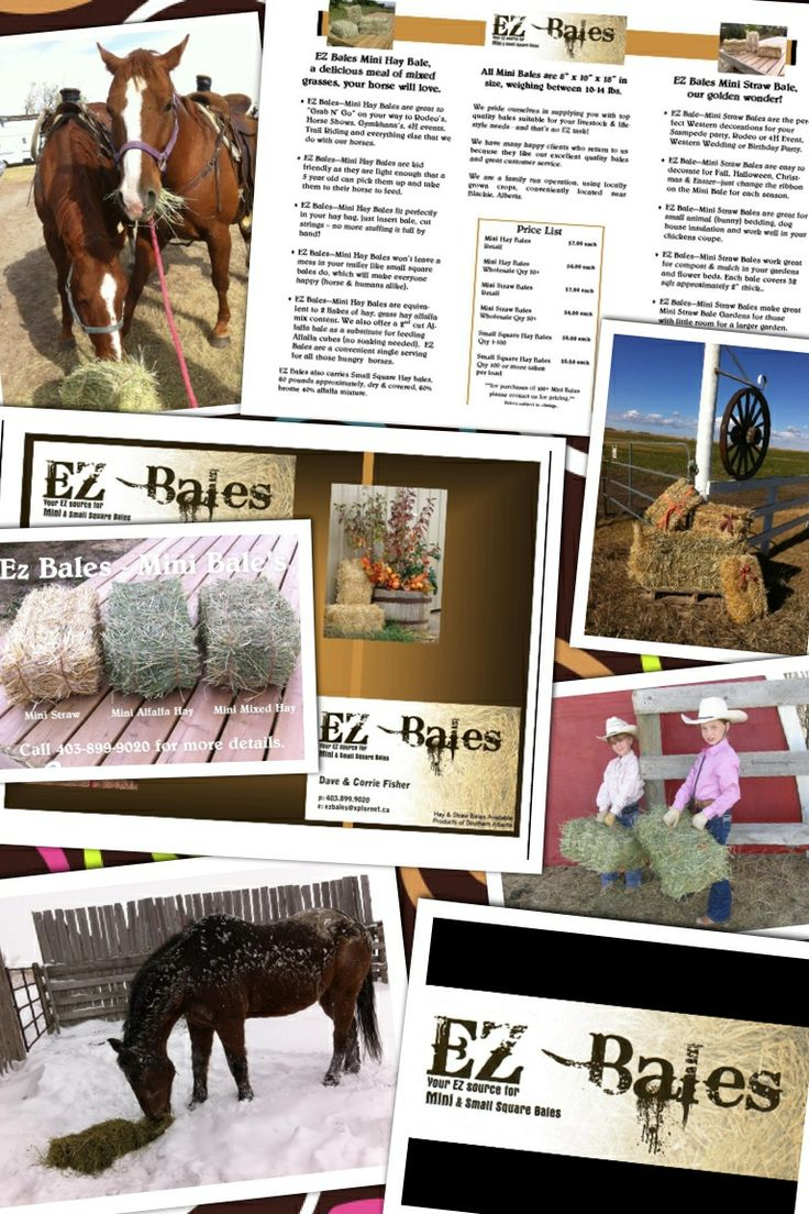 "Need hay or straw?  We have MINI Hay & MINI Straw bales for sale, each weigh 10-12 lbs and measure 8""x 10""x18"" (just a little longer than a legal size piece of paper) and equivalent to 2 flakes from a small square sized bale.    Please send me a private message or email ezbales@xplornet.ca or reach me through our Facebook page called EZ Bales!"