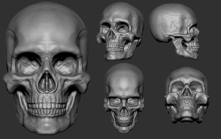 Zbrush skull study by louisbrill