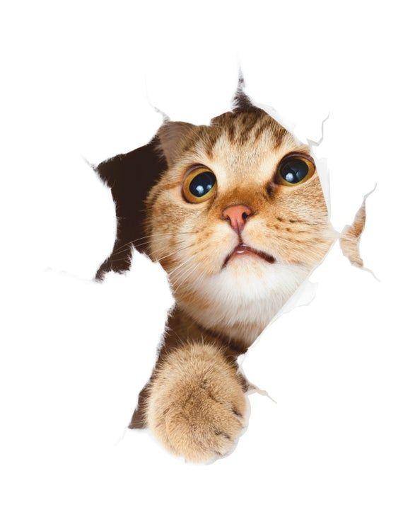 Cat 3D Wall Sticker, Cat Wall Decal, Pet Removable Vinyl Sticker, Animal, Decor for Home, Wall Art