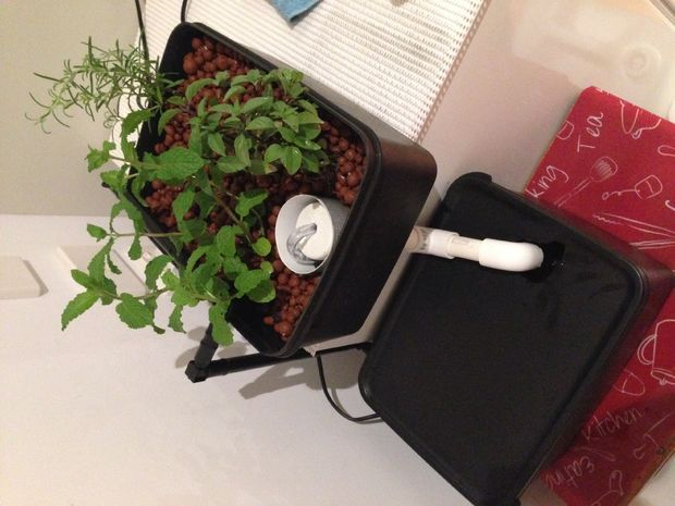 ebb-and-flow hydroponic herb garden