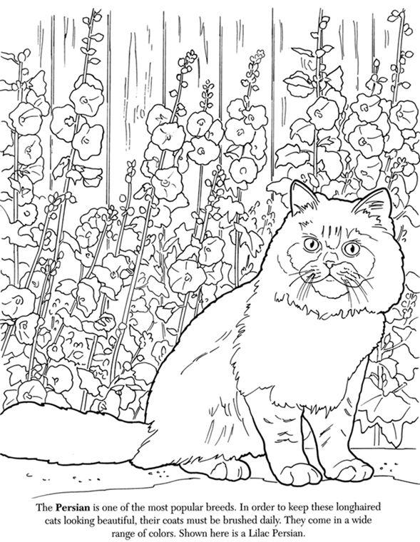 coloring pages for adults finished   Finished Adult Coloring Cat Already Coloring Pages