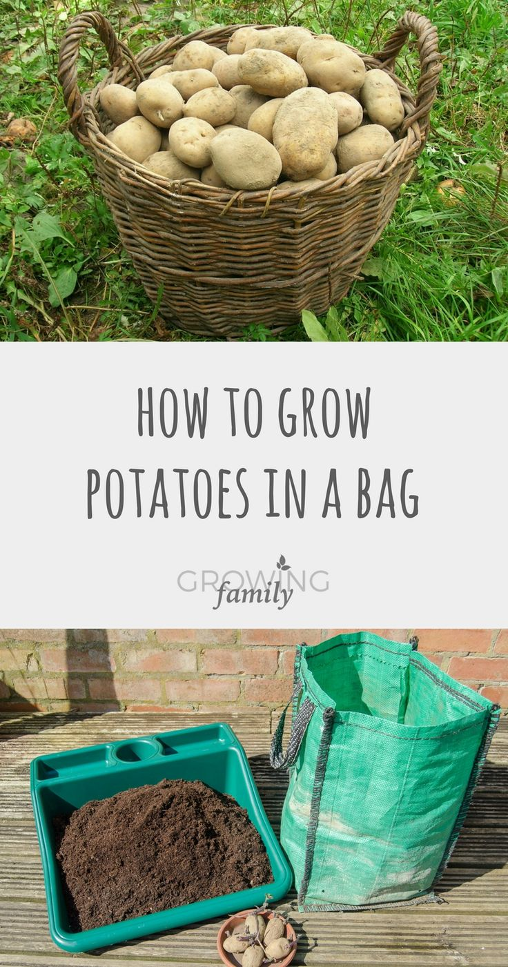 Best 25 Growing Potatoes In Bags Ideas On Pinterest Grow Bags Potato Plant Images And
