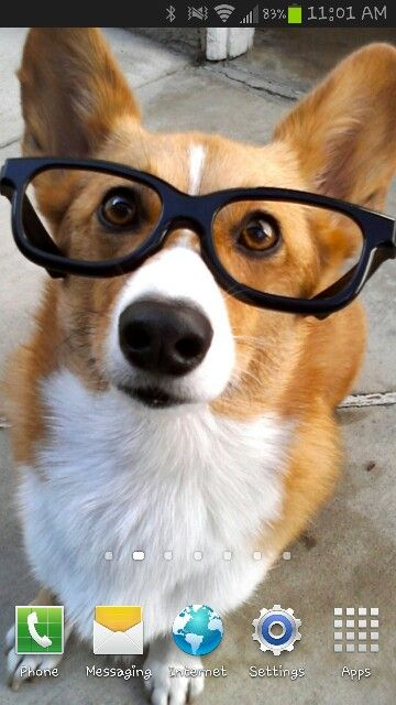[Animals wearing glasses: dogs] Smart Dogs: 20 Adorable Photos of Dogs  Wearing Glasses. You can never have too many pictures of dogs wearing  glasses!