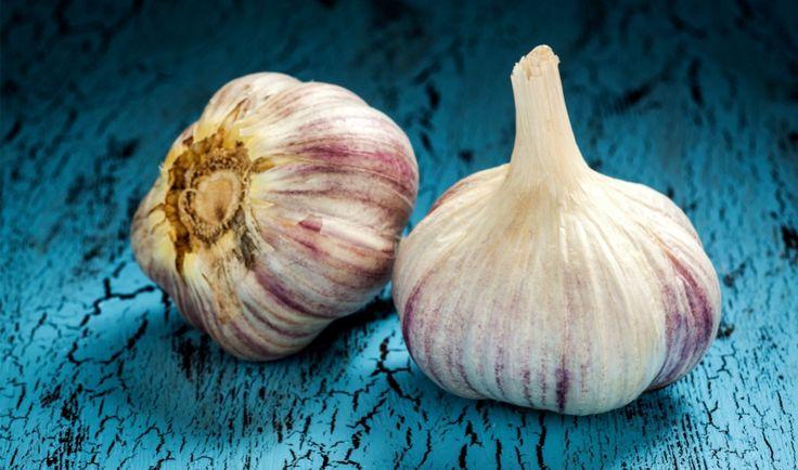 Česnek je součástí mnoha pokrmů a díky své výrazné a nezaměnitelné chuti a vůni se směle může stát i hlavní hvězdou v našich receptech.