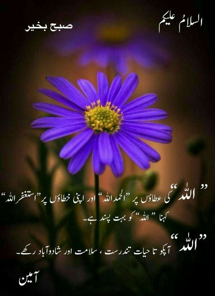 Pin By Niaz O On Good Morning Good Morning Images Good Morning Greetings Photo Album Quote