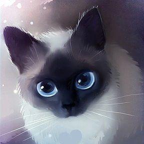 ♥Тайские , сиамские кошки ♥