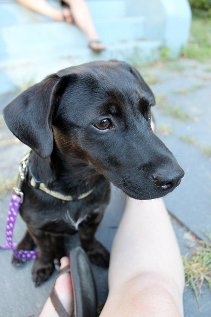 Dachshund Terrier Or Lab Mix Just Like My Dog Our 4