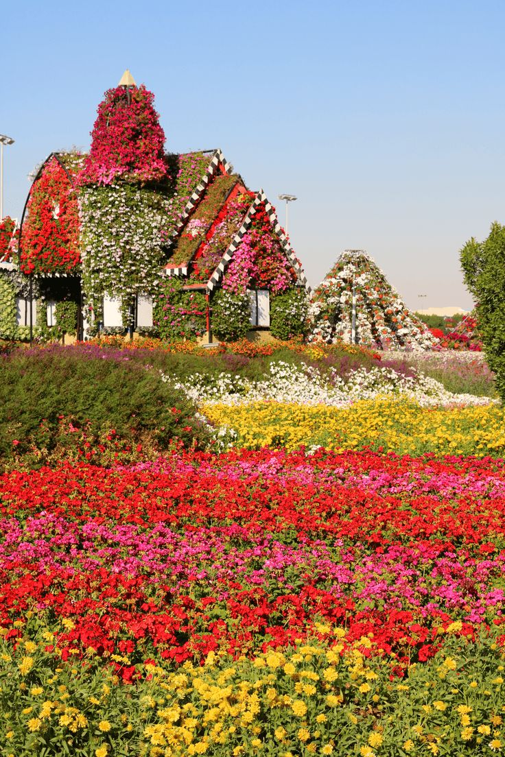 Dubia Miracle Garden of 45 million flowers -