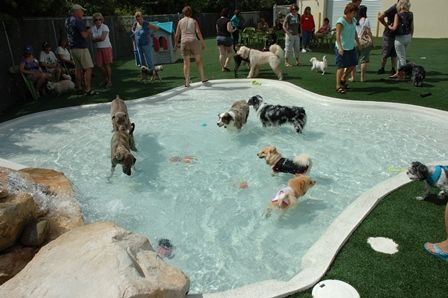 Dog swimming pool.. (Coco and Penny wish)