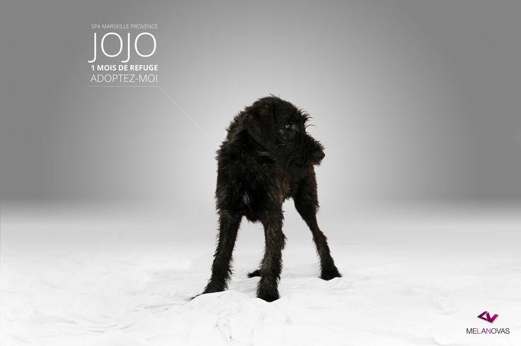 Souvent c'est pas Jojo mais là oui !