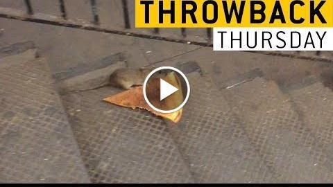 PIZZA Rat    JukinVideo Throwback Thursday - http://ractube.com/pizza-rat-jukinvideo-throwback-thursday/