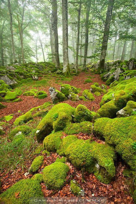 Sierra de Aralar, Navarra Spain by Photographer Camilo Margelí