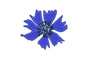 Cornflowers tincture (plant that heals)