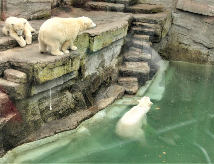 What to visit in Vienna? The Schonbrunn ZOo!