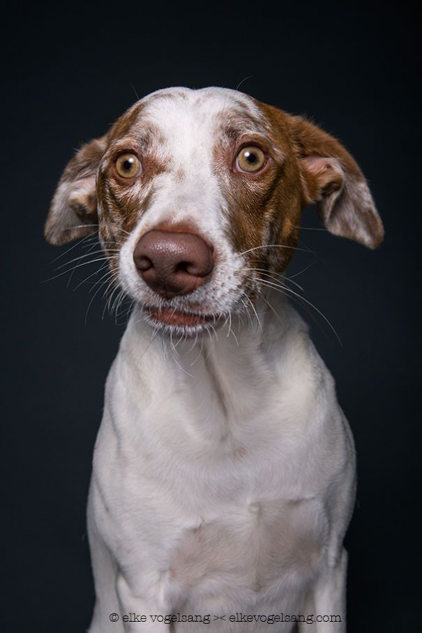 Intimate Portraits Reveal Amusing Facial Expressions of Skeptical Dogs - My Modern Met