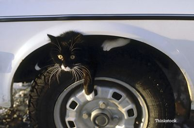 Cats and Cars in Cold Weather