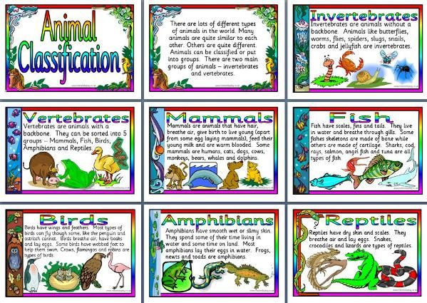 KS2 Science teaching resource, Animal Classification printable posters for classroom display