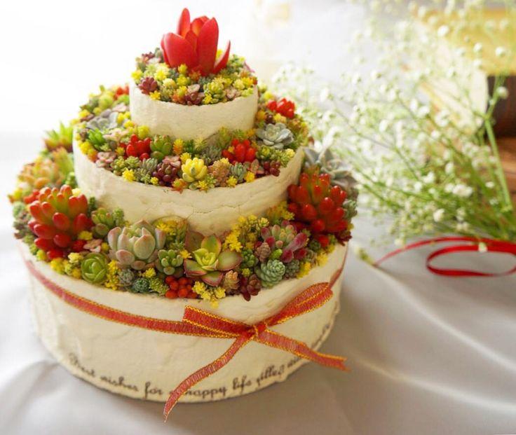 2017.05.01 ♥Happy Wedding♥ 4/29は妹の結婚式でした♡ 大好きな妹に多肉ケーキをプレゼント acoさん♡( @jewelgarden_aco) 素敵なリメ缶ありがとうございました✦ฺ . みんなの愛とサプライズで満ち溢れたとっても素敵なお式でした❀.(*´◡`*)❀. 子供たちもリングボーイ&ガールの大役果たせたし、 両親へのサプライズとして新郎新婦&友達たちと練習してきたフラッシュモブも大成功しましたー♪ プロの素敵なお写真が届いたら載せちゃおっかな(♡ˊ艸ˋ)♬* . . さて、2日だけ仕事がんばろ! . . #wedding #weddingcake #cake  #succulent #succulents #succulove #leafandclay #sedum #garden #gardening #多肉 #多肉植物 #セダム #タニラー #雪国タニラー #信州29会 #ちまちま倶楽部 #ちまちま寄せ #寄せ植え #まいまい寄せ #セダム丼 #セダム寄せ #よせよせセダム #リメ缶 #まいさんちのちまちま寄せ #ケーキ #多...