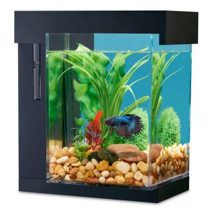 Cats fish aquariums and aquarium on pinterest for Easy aquarium fish