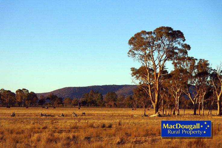 Imagine living on this property, good soils, great views toward Mt Duval and fantastic sunsets. 8 km from Armidale.