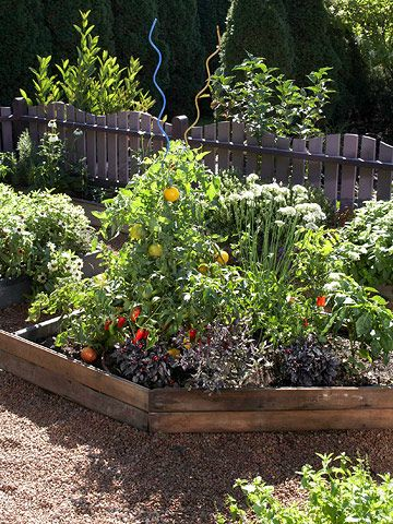 salsa garden. cilantro, 2 types of tomatoes, jalapenos, a variety of peppers, & garlic chives.