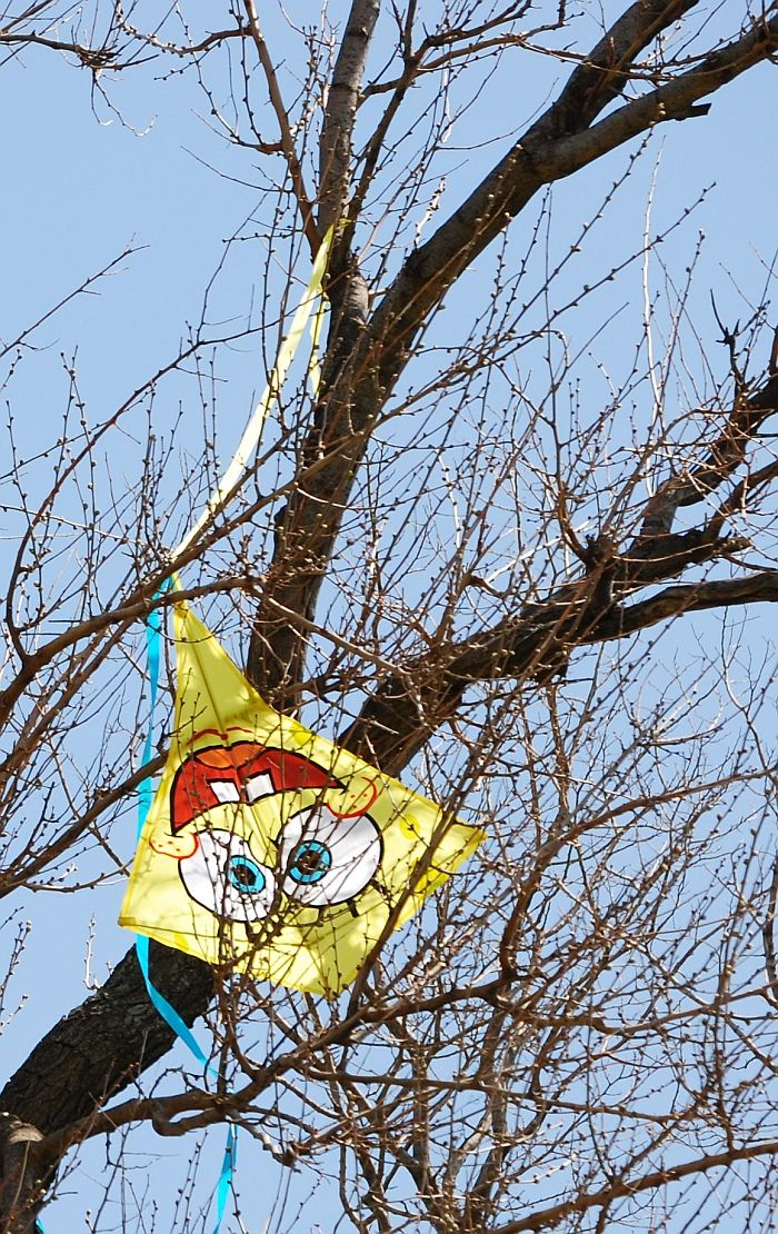 "It was a funny kite already, with the big eyes and toothy smile. Being stuck upside down in a tree seems to add to the chuckle factor here! I wonder if this kids' kite was ever rescued... T.P. (my-best-kite.com) ""Kite mishap"" Cropped from a photo by Katie Harbath on Flkr."