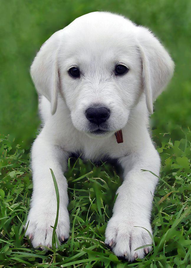 Akbaş köpek cinsleri bilgili duyarlı sahip gerektirir. Çünkü diğer köpeklere karşı saldırgan olabilirler. Sadık köpekler olan Akbaşlar iyi bir bekçi köpeği, aynı zamanda büyük ve küçük baş hayvancılık için mükemmel bir çoban köpeğidir. Akbaşları saldırgan tutum içerisine sokmamakta yarar vardır. Akbaş yavrularına ve sahiplerine karşı her zaman koruyucu olurlar.