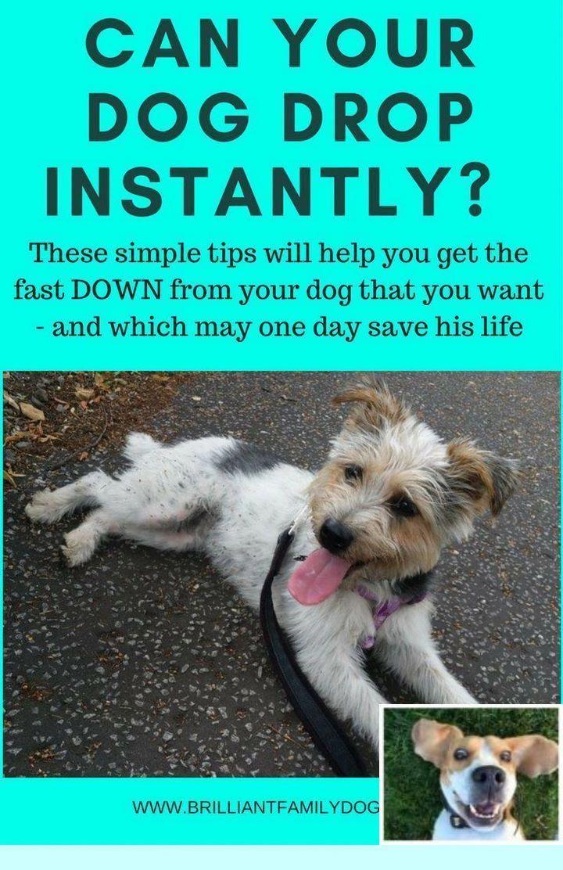 Potty Training Puppy Apartment Petco : potty, training, puppy, apartment, petco, Puppy, Training, Classes, Petco, Elmhurst., Check, IMAGE, Various, Obedience,