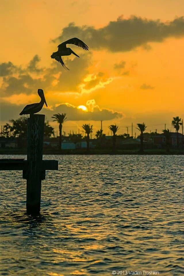 Galveston from Pier 61