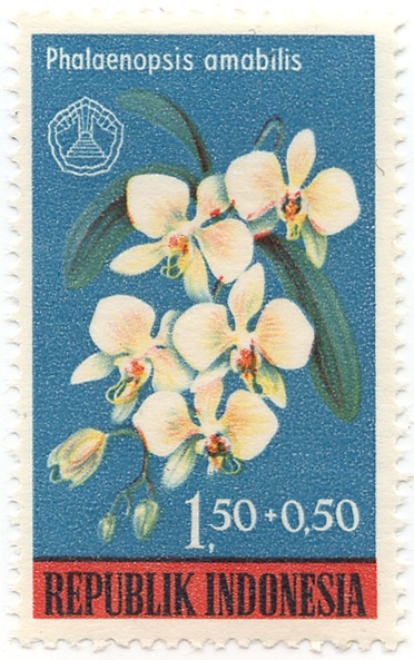 Phalaenopsis amabilis, known as the Moth Orchid,  or Phal. Stamp printed in Indonesia