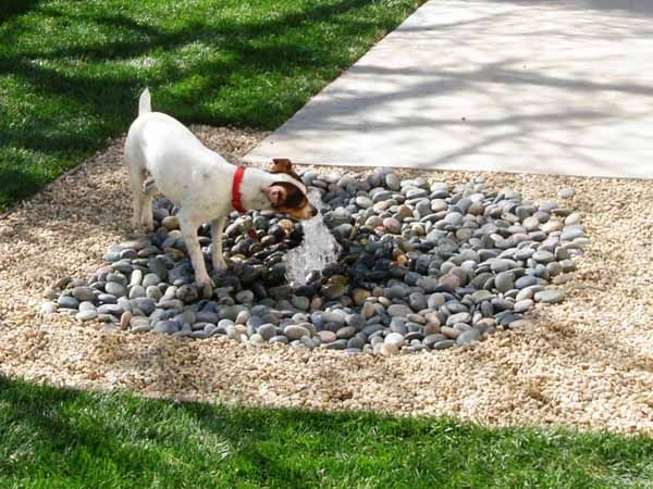 8 backyard ideas to delight your dog                                                                                                                                                                                 More