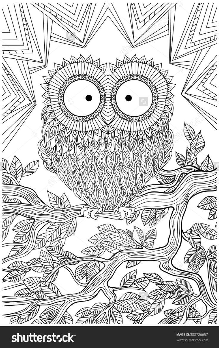 1089 best Birds to Colour images on Pinterest  Owls Adult