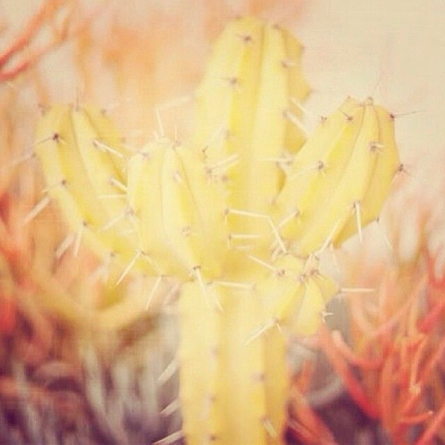 Cactus by @marina_taste