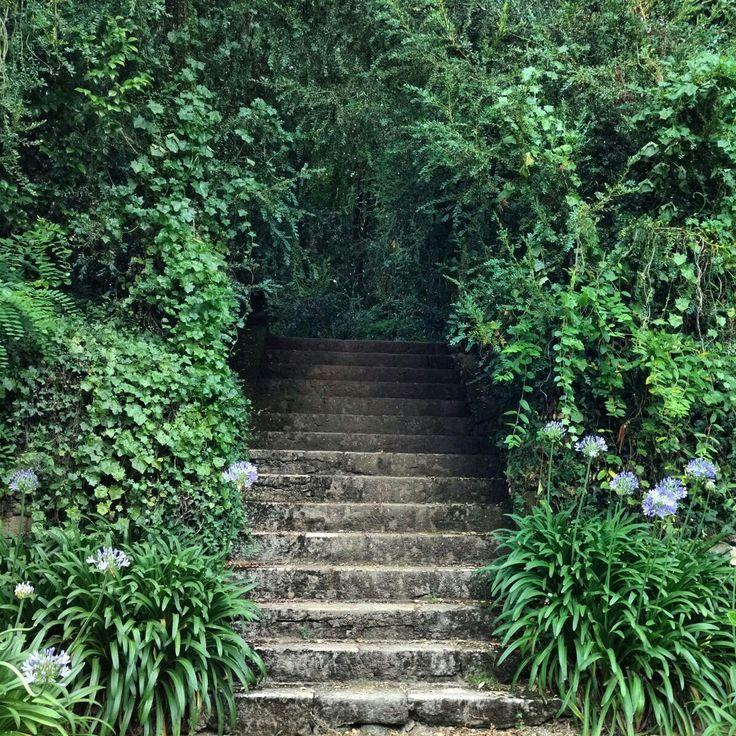 """Escaleras que conducen a otros """"túneles"""" - Pazo de Santa Cruz de Rivadulla  #escaleras #tuneles #alivioendíasdecalor #nodejaindiferente #jardingallego #pazoconhistoria #pazodesantacruzderivadulla #pazodeortigueira #vedra #coruña #cercadesantiagodecompostela #muycercadesantiago"""