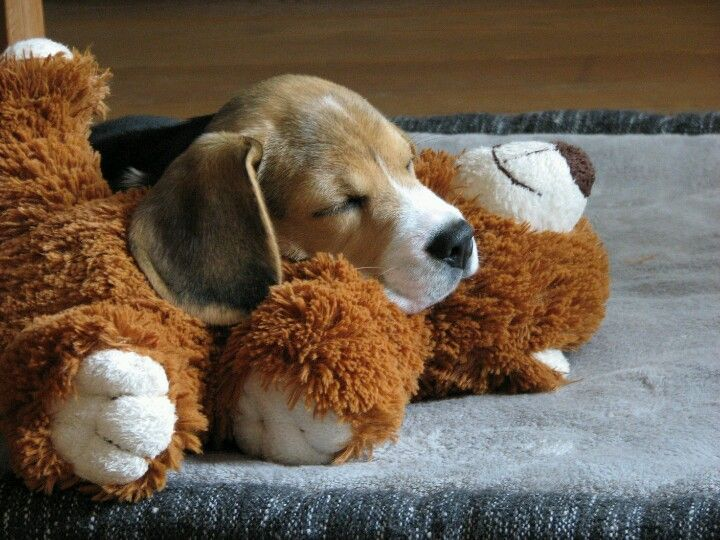 """I don't think in our house, we have """"ever"""" had a toy """"with the stuffing""""still in it by nap time!!"""
