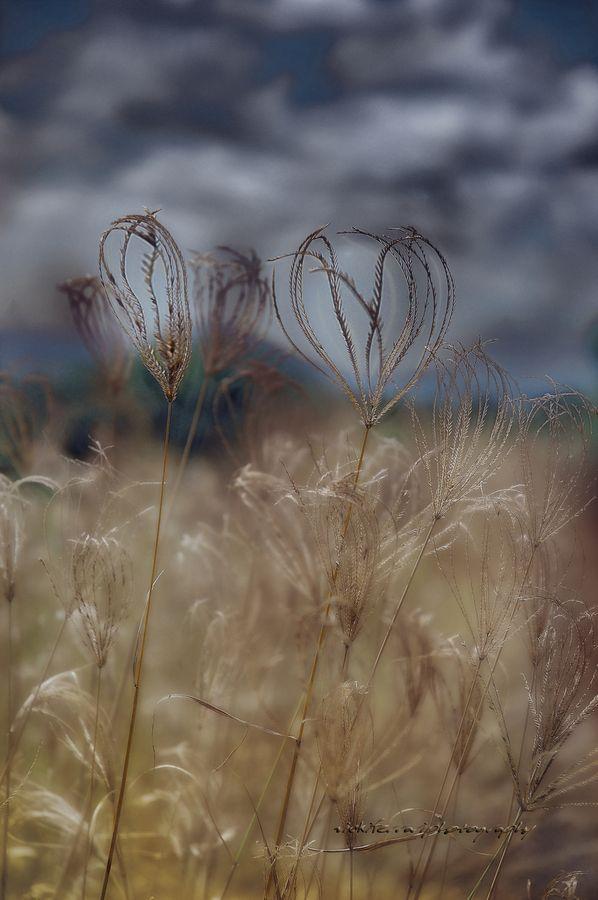 Grass heart.