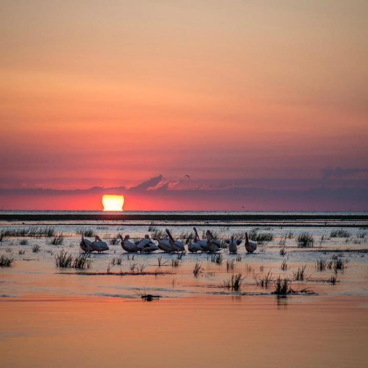 Danube Delta by Patrick Kelly