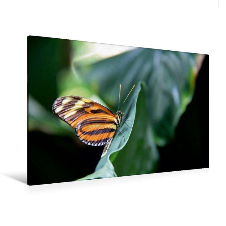 Passionsblumenfalter (Premium Foto-Leinwand 45x30 cm, 50x75 cm, 90x60 cm, 120x80 cm)