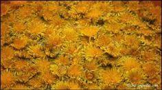 Elisir depurativo ai fiori di tarassaco