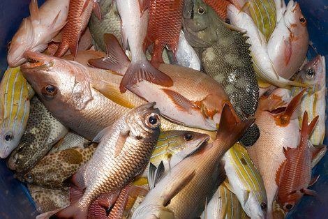 132 best fishing hunting trapping images on pinterest for Best fish to eat for health