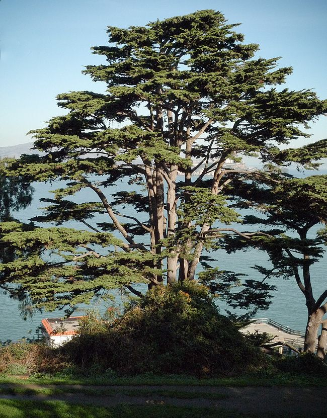 17 Best Images About Cypress On Pinterest Carmel By The