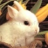 http://mondocrueltyfree.it/mimetas-il-dispositivo-alternativo-alla-sperimentazione-animale/