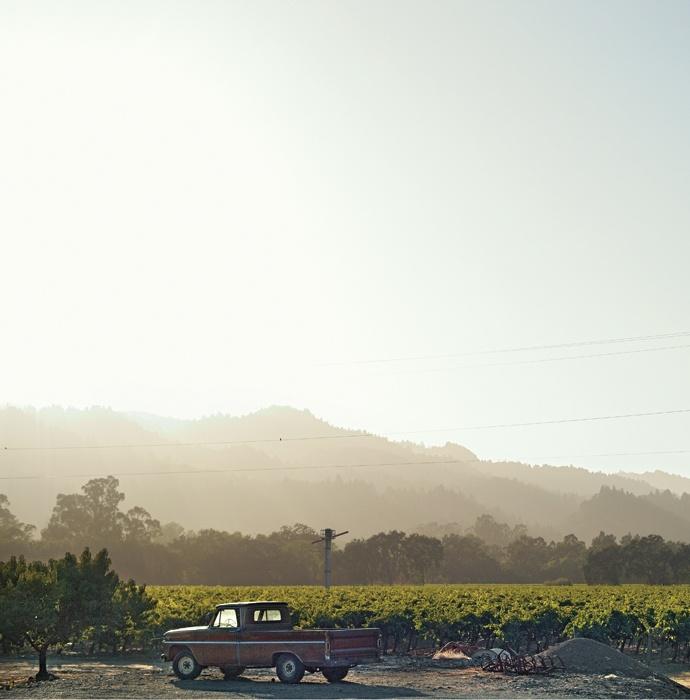 Through the grapevine: Early morning sun illuminates a vineyard on the Silverado Trail, a historic trade route on the eastern edge of Napa Valley. #California